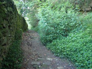 Camiño Sacramental -Sobreviñas-